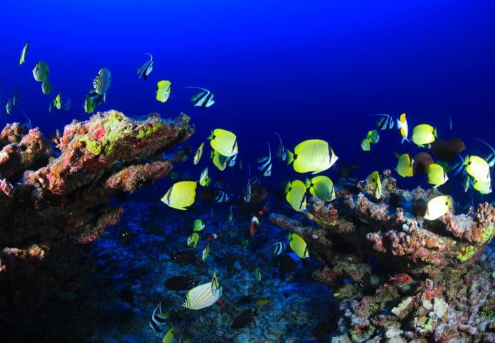 coral reef, hawaii, ocean