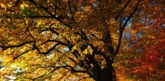 best fall foliage, best fall leaves, fall foliage, fall leaves, fall colors, fall leaves, fall scenery, best fall colors in usa, best places to see fall foliage, best fall foliage, fall colors near me, foliage