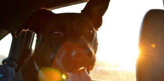 Pet car accessories, pet, pets, cars, car accessories, pet safety, vehicle accessories, the best pet car accessories,