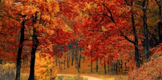 best fall travel destinations, best places to travel in october, best places to visit in october in europe, best european cities to visit in october,
