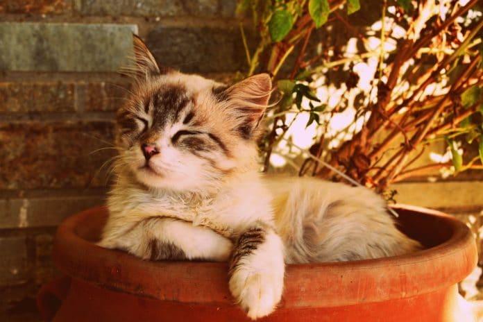 best luxury cat beds, luxury cat beds, luxury pet beds, luxury beds for cats, luxury kitten beds, luxury cat condo, cat condo, cat beds, best cat beds
