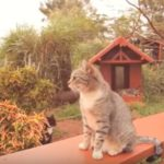 lana'i cat sanctuary, real estate, larry ellison